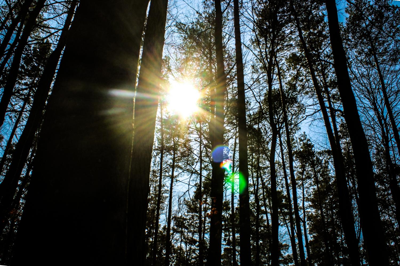 Wald in der Feldberger Seenlandschaft am Waldhof